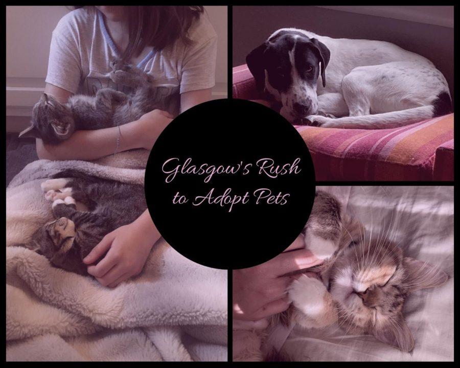 Glasgow's Rush to Adopt Pets