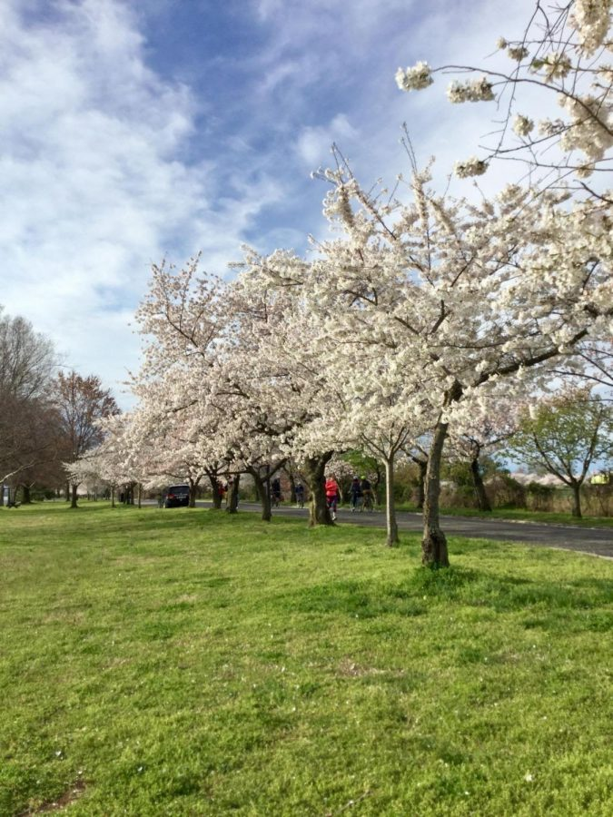 National+Cherry+Blossom+Festival+In+Review