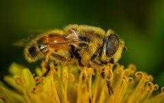 A Pain in the Sinuses: Seasonal Allergies